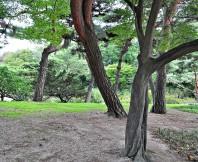 나무,소나무,풍경